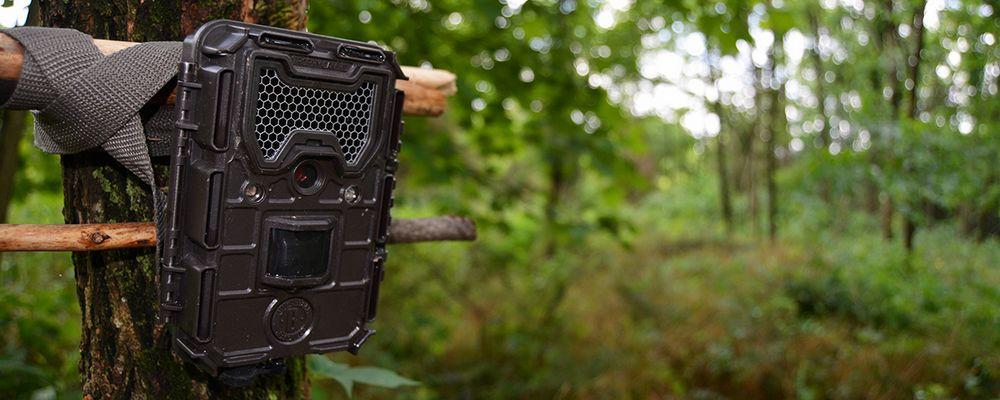 choisir la meilleure caméra de chasse